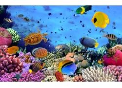彩色珊瑚鱼群背景墙