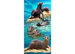 水獭与海豹