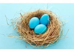 鸟窝里的彩蛋图片