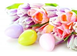 郁金香彩蛋图片