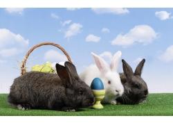 草地上的兔子和彩蛋图片