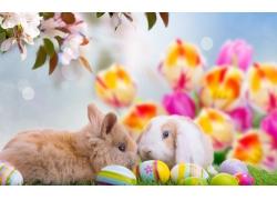 桃花彩蛋和兔子图片