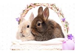 竹篮里的兔子图片