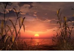 夕阳下的野草