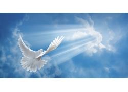 天空中的鸟
