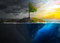 树木与海洋