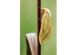 野草上的飞蛾