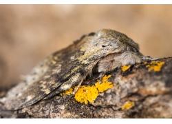 树皮上的飞蛾