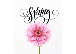 粉色花朵背景设计