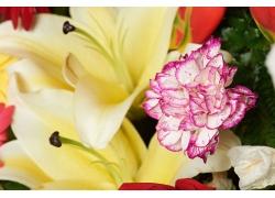 百合康乃馨