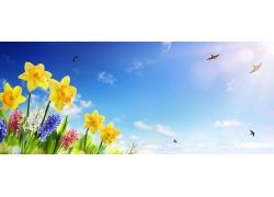 水仙花与蓝天风景