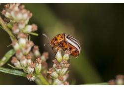 花卉上的甲虫高清