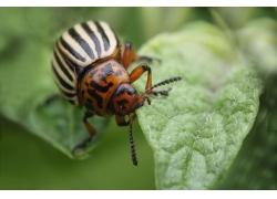 吃叶子的害虫高清
