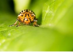 植物上的甲虫高清
