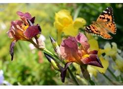 蝴蝶和枯萎的兰花