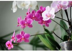 鲜艳的兰花