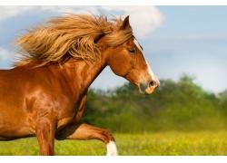 一只奔跑的骏马