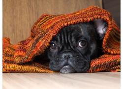 布料中的一只小狗