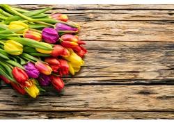 木板上的彩色郁金香