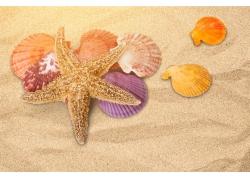 海星贝壳的沙滩背景