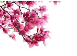 粉红色的兰花背景