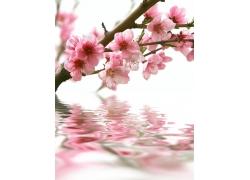水上的桃花风景