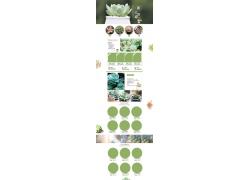 绿色植物淘宝装修模板