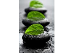 养生黑石和绿叶