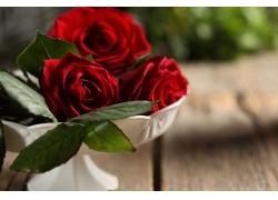 绿叶红玫瑰花