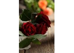木板上的红玫瑰花