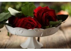 白花盆玫瑰花