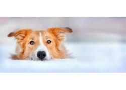 雪地里的小狗