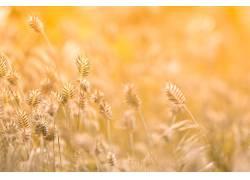 干枯植物和黄色背景