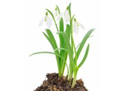 土壤中的兰花摄影