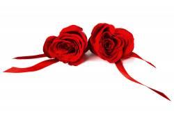 飘带与玫瑰花
