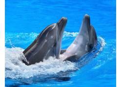 表演的海豚