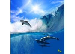 海浪与海豚