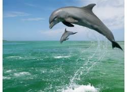 跃出水面的海豚