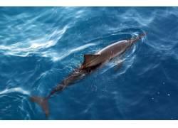 水里游玩的海豚