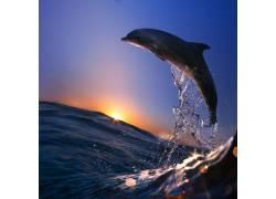 跳出水面的海豚