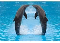 面对面的海豚