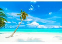 海边的椰树美丽风景图片
