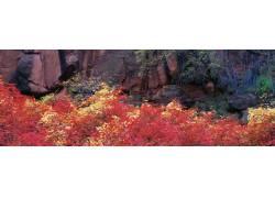 岩山树林美景摄影