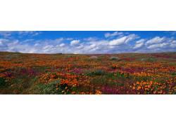 红色花卉背景