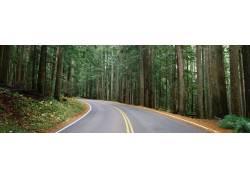 树林公路高清摄影