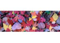 彩色树叶高清摄影