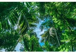 热带植物风景