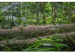 植物苔藓高清摄影