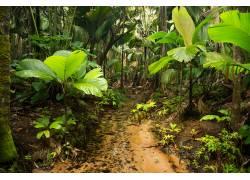 雨林小路高清摄影