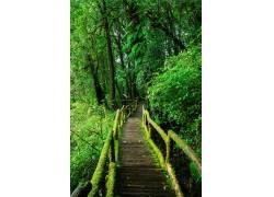 绿色树林高清美景